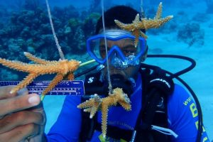 BESS Coral Restoration - BREEF